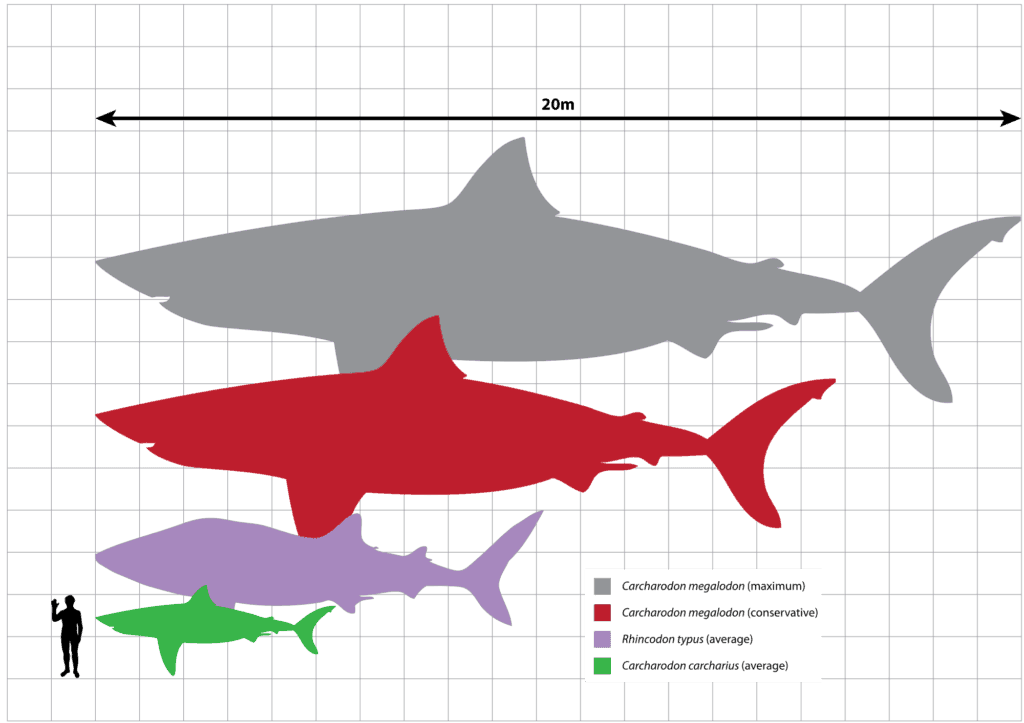 loan shark definition sizes and names of sharks in the world