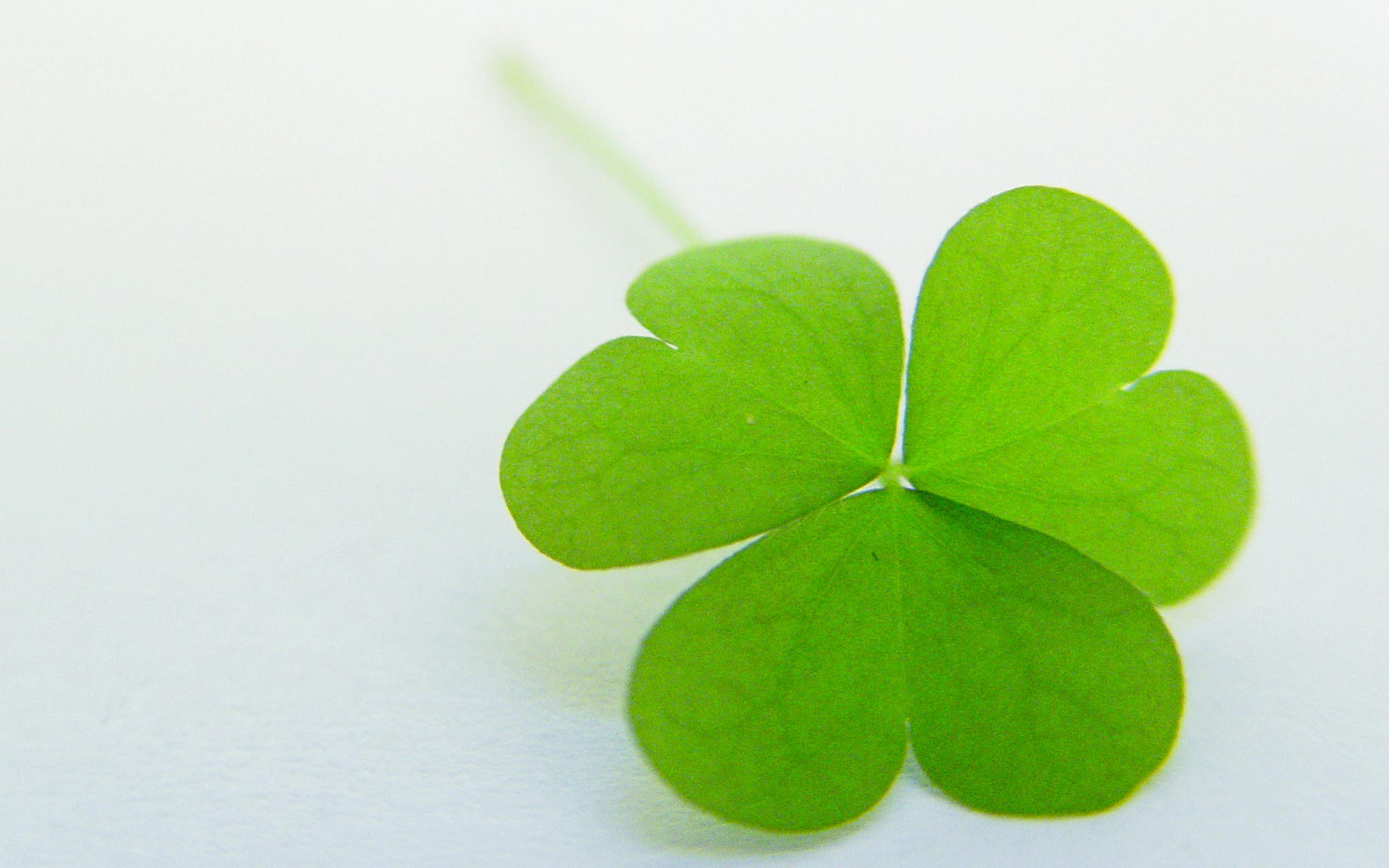 quick loans ireland 4 leaf clover green shamrock
