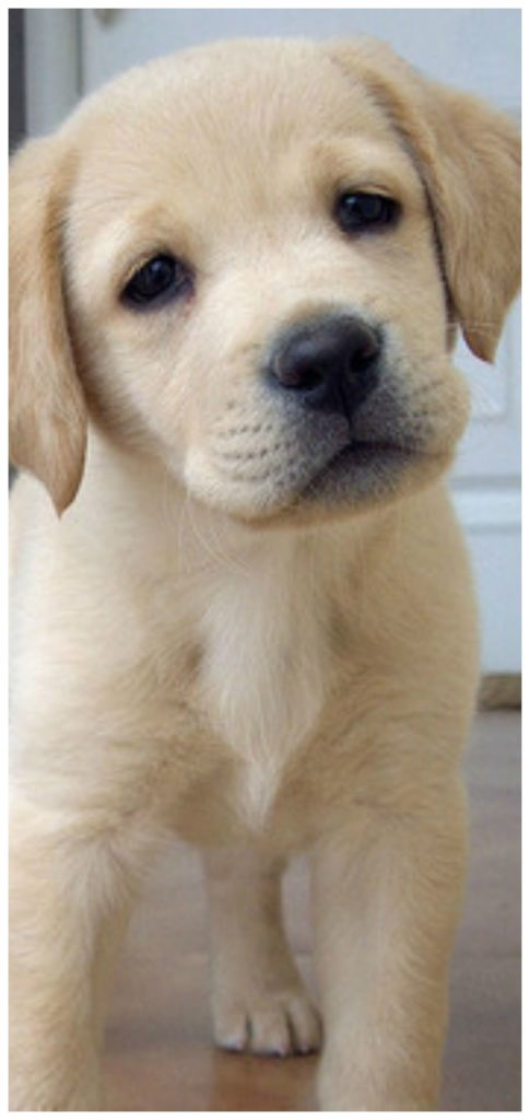 small payday guarantor loans tiny puppy