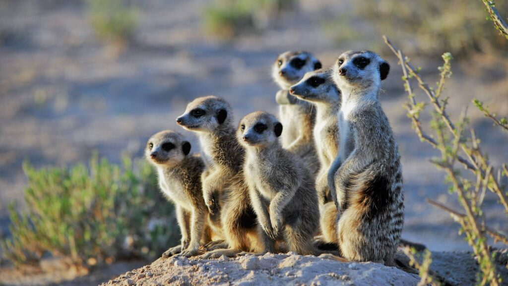 compare the market loans meerkat family