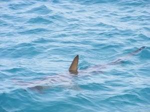 private loan sharks near me fin in sea