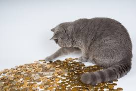 Installment Loans For Bad Credit Direct Lenders Only cat clawing at coins