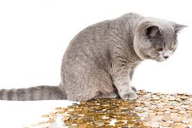 Small Little Loans Online cat playing with coins